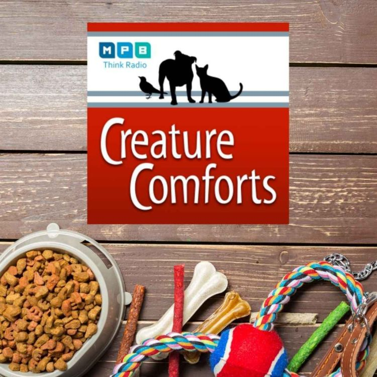cover art for Creature Comforts | Pet Day - June 2021