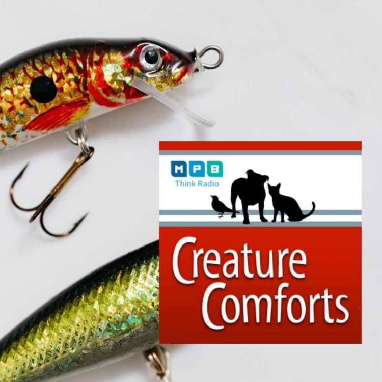 cover art for Creature Comforts | Rod and Reel