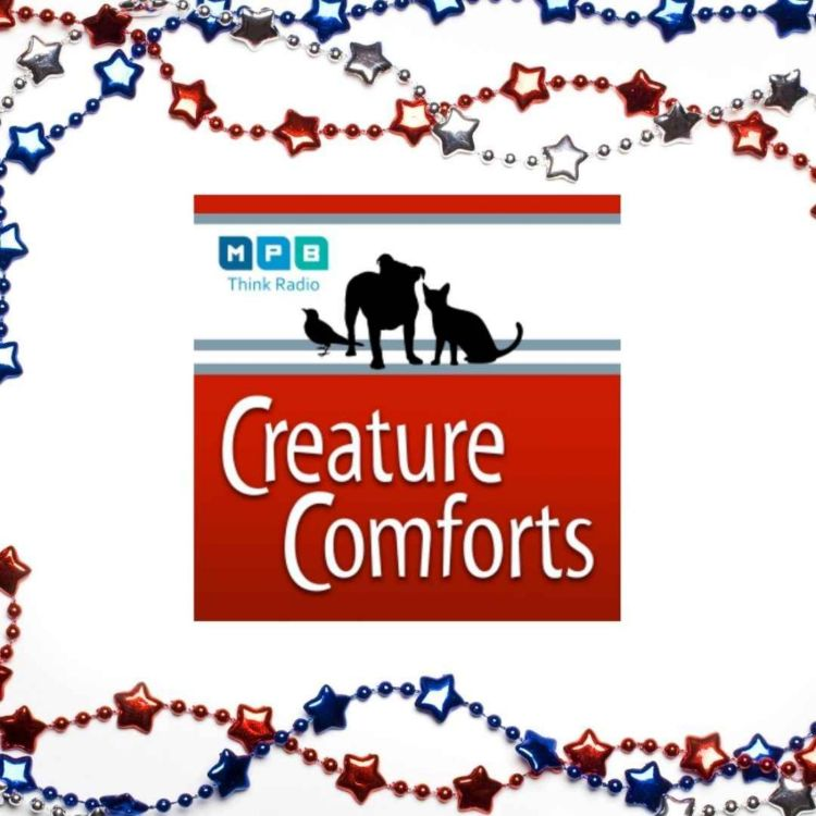 cover art for Creature Comforts | Pet Day - July 2021