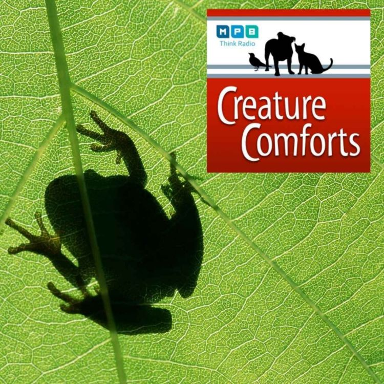 cover art for Creature Comforts   Frogs on the Porch