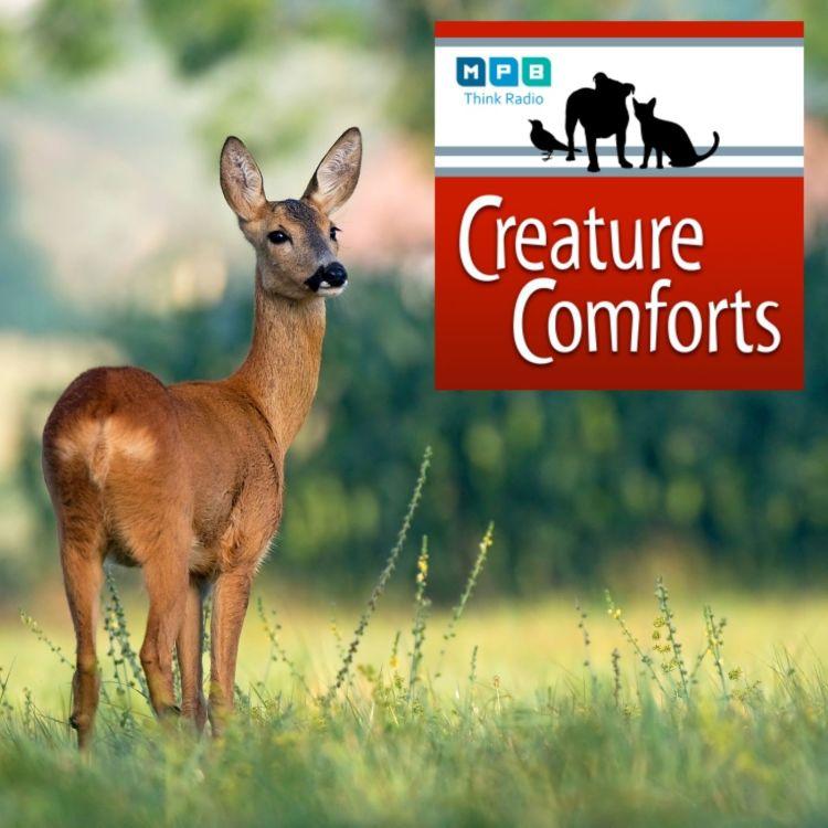 cover art for Creature Comforts | Urban Wildlife