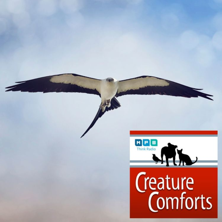 cover art for Creature Comforts | Early Migration