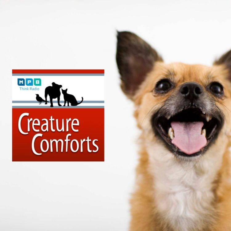 cover art for Creature Comforts | Pet Day - September 2021