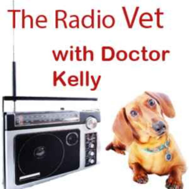 """cover art for The Radio Vet with Doctor Kelly - """"Windows to the Pet Soul?"""""""