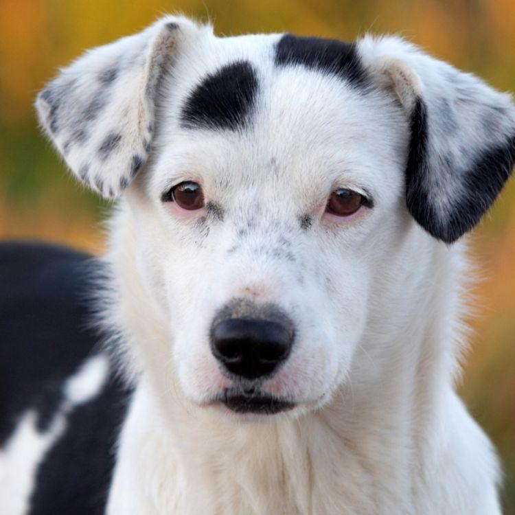 cover art for Akutt syke hunder høsten 2019 - Hva er status i saken?