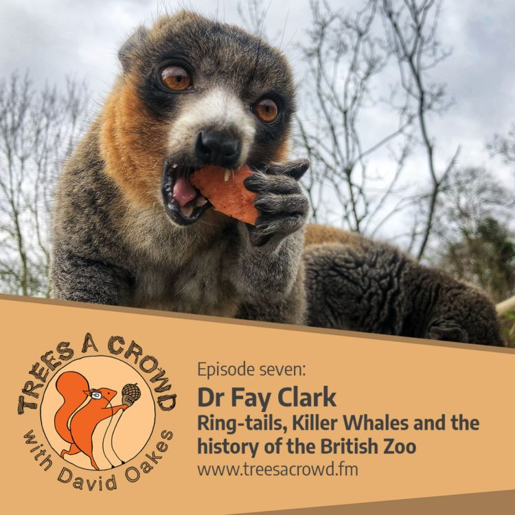 cover art for Dr Fay Clark: Ring-tails, Killer Whales and the history of the British Zoo.