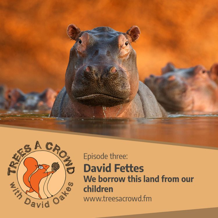 cover art for David Fettes: Going against the crowd - and the best moment to press the button