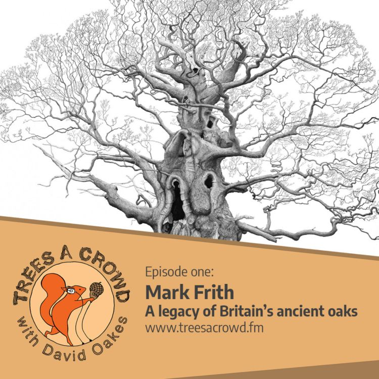 cover art for Mark Frith: a legacy of Britain's ancient oaks
