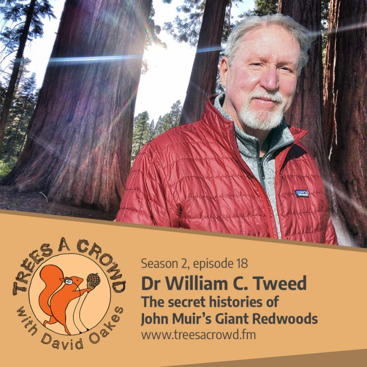 cover art for Dr William C. Tweed: The secret histories of John Muir's Giant Redwoods