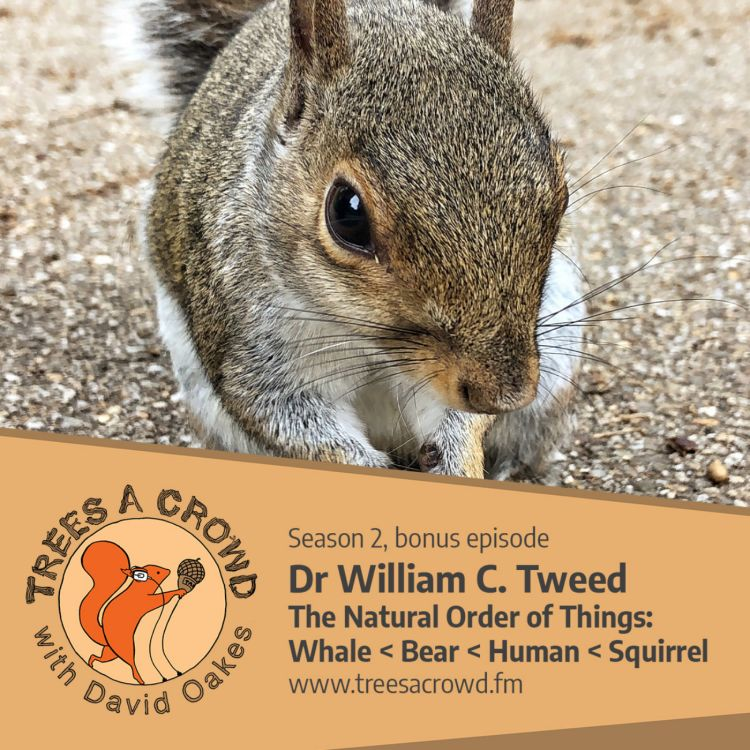 cover art for Dr William C. Tweed: Whale < Bear < Human < Squirrel