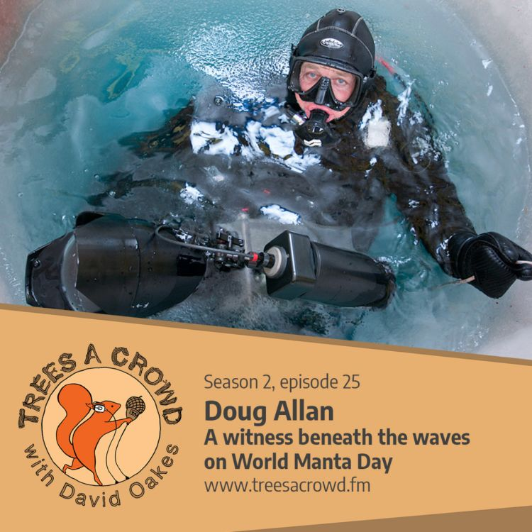cover art for Doug Allan: A witness beneath the waves on World Manta Day