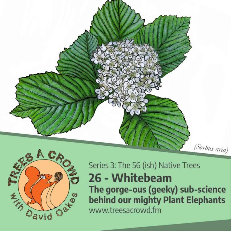 cover art for Whitebeam: The gorge-ous (geeky) sub-science behind our mighty 'Plant Elephants'