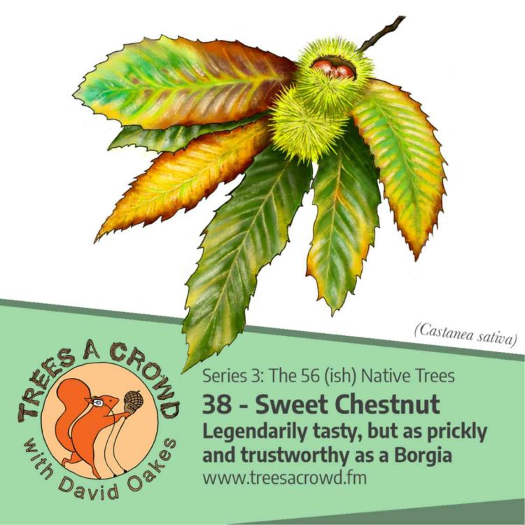cover art for Sweet Chestnut: Legendarily tasty, but as prickly and trustworthy as a Borgia