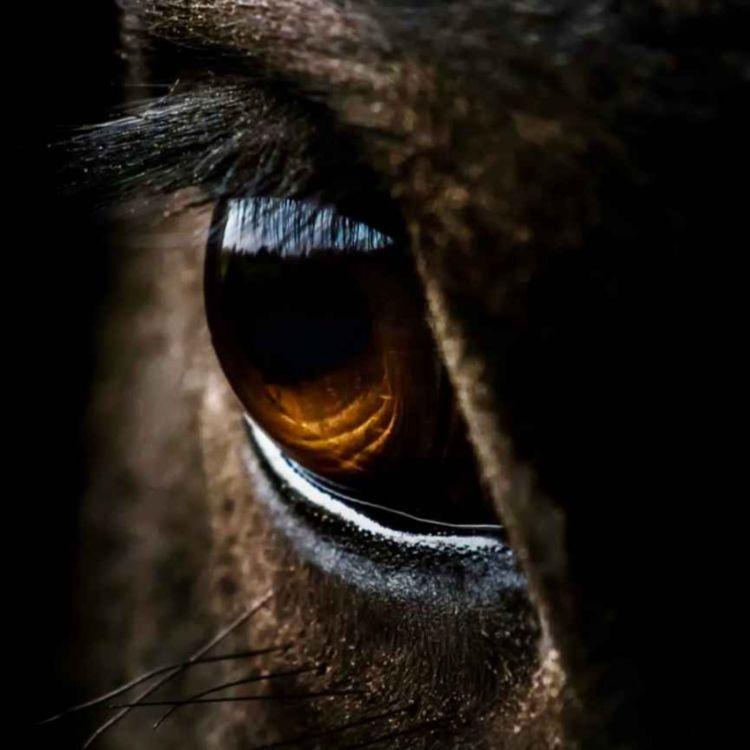 cover art for 59 - Har hesten deg i øyet?