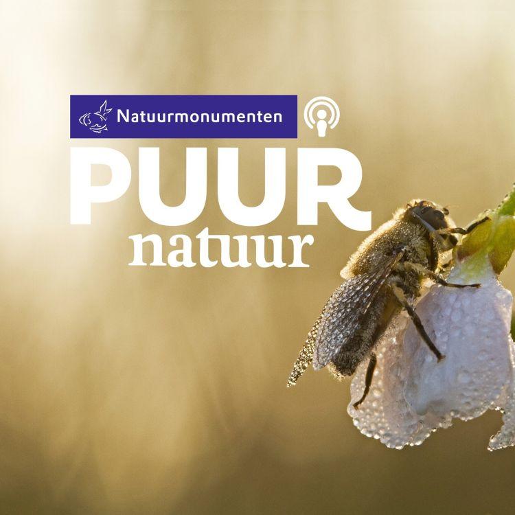 cover art for Puur Natuur: Dave Goulson, Koos Biesmeijer, Mathiska Lont: Alle beestjes helpen!