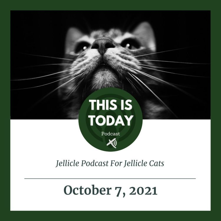 cover art for Jellicle Podcast For Jellicle Cats