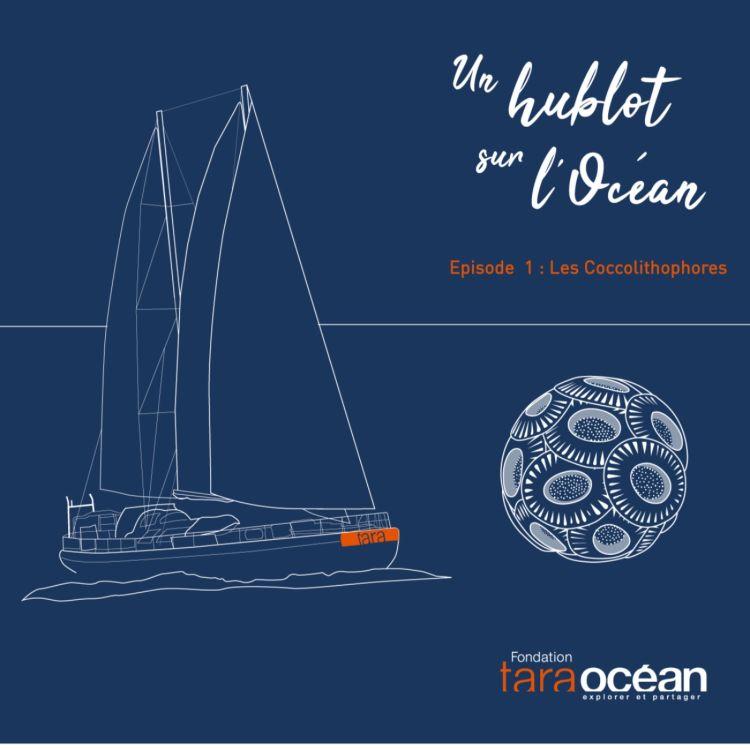cover art for Au pays des coccolithophores