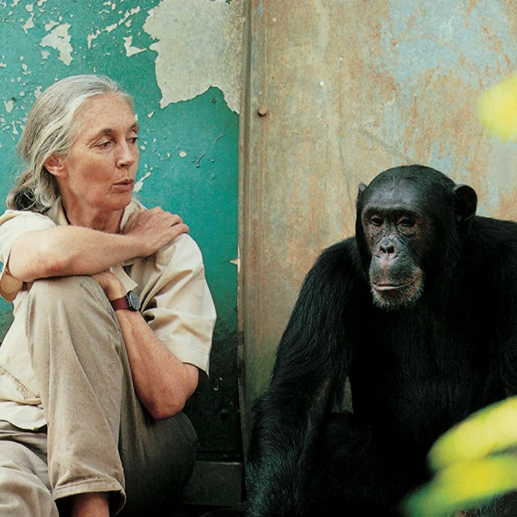 cover art for #24: Hope for our Planet – with Dr. Jane Goodall