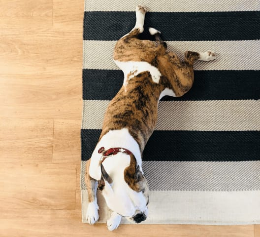 Our company dog Otto