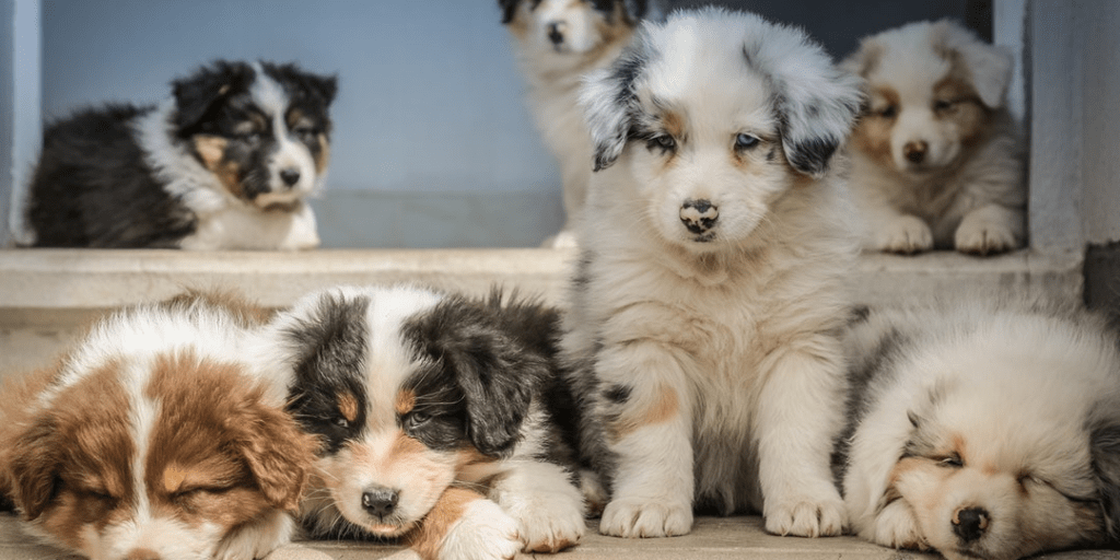 5 nyc startups for pet lovers