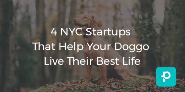 seo image for 4 NYC Startups That Help Your Doggo Live Their Best Life