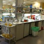 Instytut Migal Galilee wykorzystuje…