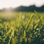 Biodegradowalna agrotkanina…