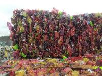 Odpad PET butelka brąz/czerwony