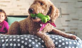 Ästhetisches Hundespielzeug mit Thermolast K