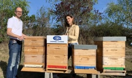 Gabriel-Chemie gives bees a home