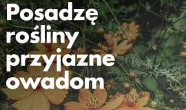 BASF Polska partnerem kampanii Zielona wstążka #DlaPlanety 2020