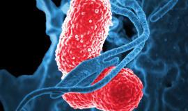 Nowa jakość polimerów w walce z patogenami