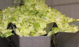 Rozwiązania Ishida dla linii produkcyjnych sałat