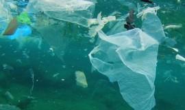 Reklamówka w oceanie i czy bać się zmieraczka zwyczajnego?
