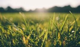 Biodegradowalna agrotkanina z Politechniki Łódzkiej