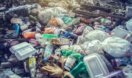 Sri Lanka odeśle gnijące odpady do Wlk. Brytanii