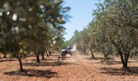 Grupa Ciech realizuje strategię globalnego rozwoju biznesu AGRO
