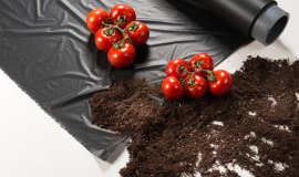 Better soil, higher yield and more taste for tomatoes