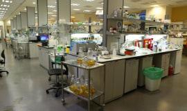 Instytut Migal Galilee wykorzystuje aplikację od Dassault Systèmes do badań nad szczepionką na COVID-19