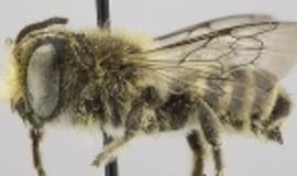 Pszczoły budują gniazda z tworzyw sztucznych