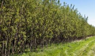Eine neue Einnahmequelle für britische Landwirte
