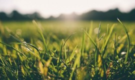 Biodegradowalna agrotkanina