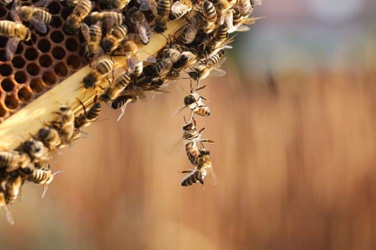 pszczoly-polimarky