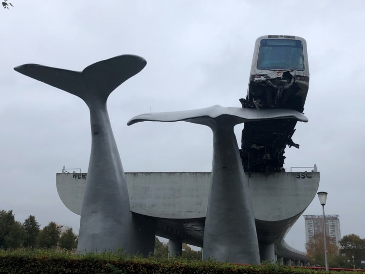 solico-whale-tail-2-20201102135959-1