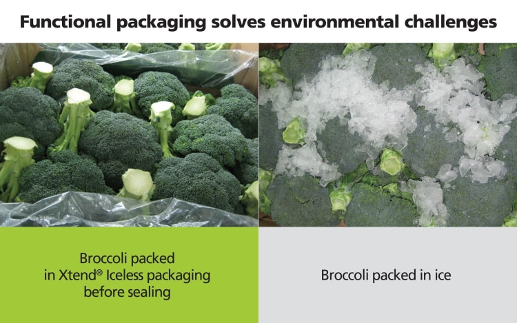 broccoli-packed-in-stepac-xtend-vs-ice-packed-brocolli
