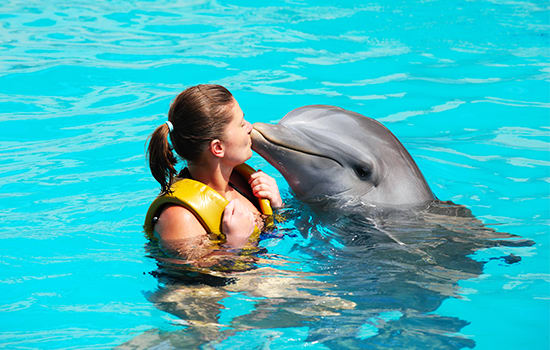 Swim and interact with dolphins!