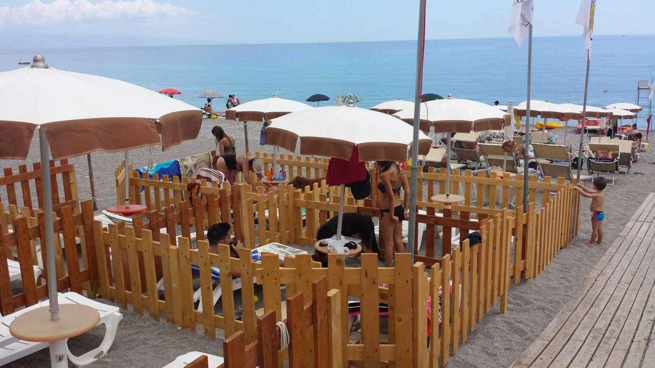 dog beach mazzeo