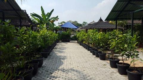 Wisata Lembah Desa Agro Tabulampot Jogja