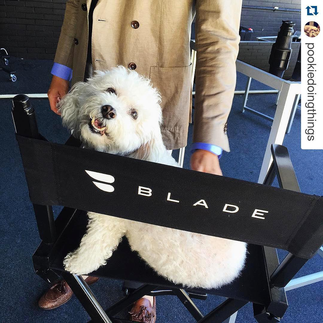 Blade dog director's chair
