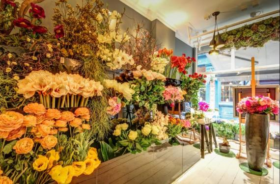Galton Flowers Hampstead